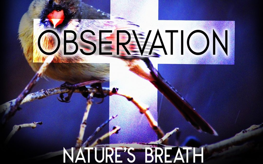 Nature's Breath: Observation